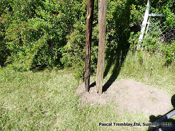 Fence Rails And Posts How To Install Cedar Rustic Split Post