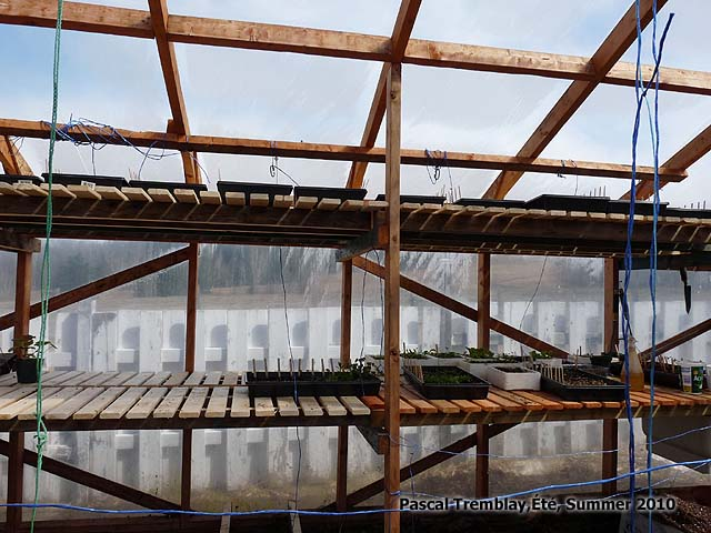 Pvc greenhouse shelf plans woodguides for Inexpensive greenhouse shelving wood