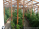 Build Garden Greenhouse DIY Design Ideas