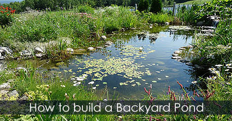 How to build a garden pond pond building guide and tips for Building a koi pond step by step