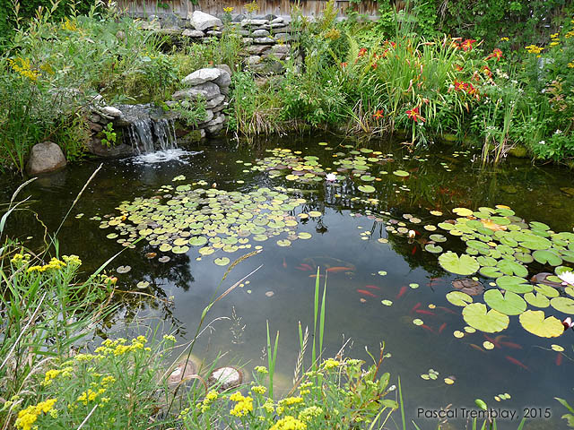 How to plant pond plants pond planting instructions for Planter fish pond